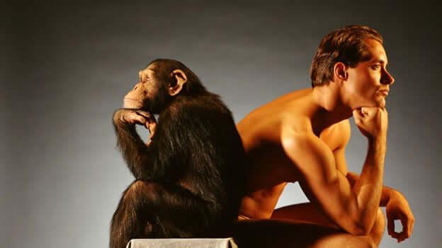 Metadeumanizzazione, uomo e scimmia