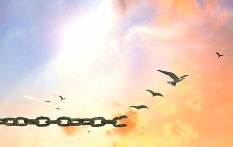 Uccelli che spiccano il volo