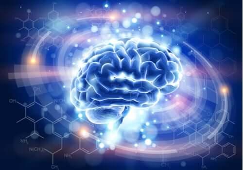 Immagine computerizzata del cervello