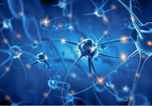 Connessioni neuronali