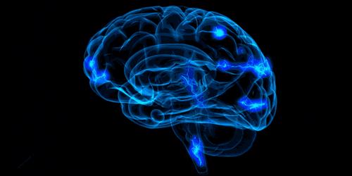 Cervello e connessioni cerebrali