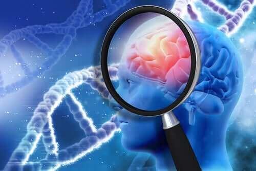 Illustrazione cervello con lente e dna