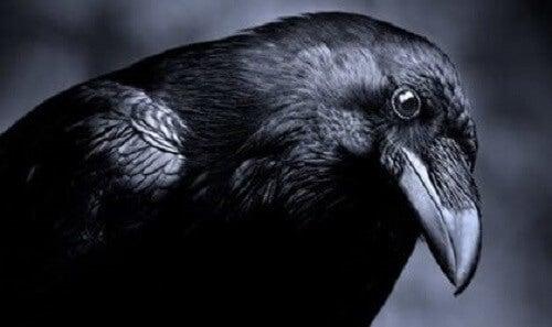 L'intelligenza del regno animale: i corvi