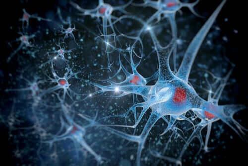 Connessioni tra neuroni cervello