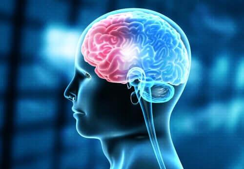 Rappresentazione del cervello