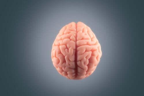 Cervello su sfondo grigio