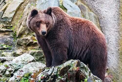 Atalanta fu allevata da un orso