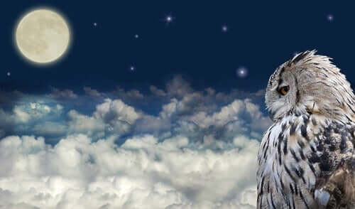 Gufo e luna nel cielo