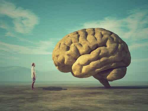 Il cervello ha le rughe: perché?
