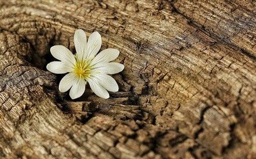 Fiore che fiorisce in un tronco e lezioni di resilienza al tempo del coronavirus