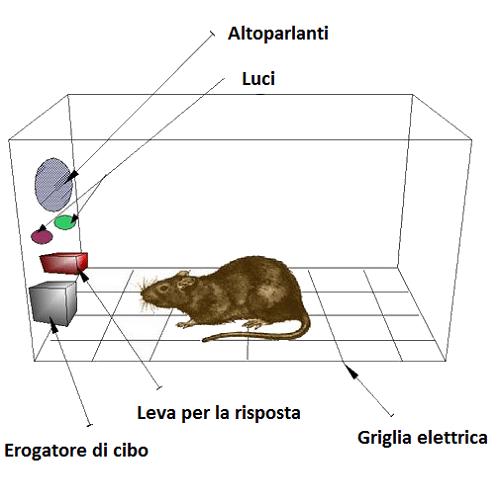 Condizionamento operante con cavie da laboratorio