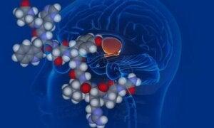 Vasopressina, l'ormone antidiuretico