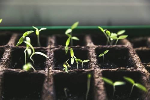 Coltivare l'orto in quarantena: più che una moda