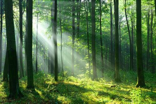 Un bosco e luce del sole