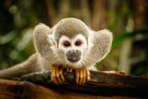 Etologia: la scienza del comportamento animale