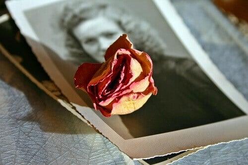 Foto con rosa sopra
