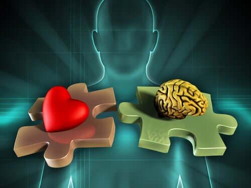 Neuroanatomia delle emozioni