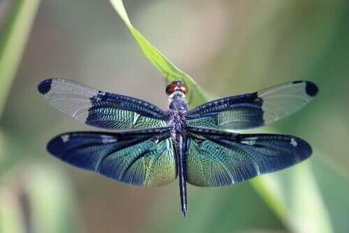 La metafora della libellula e i cicli della vita