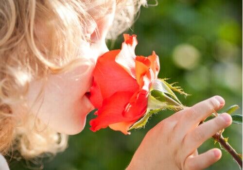 Profumo di fiori