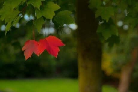 Albero con due foglie rosse