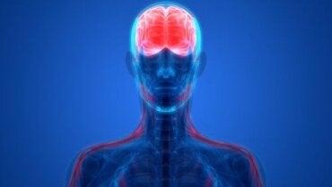 Psichiatria biologica: di cosa si occupa?