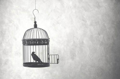 Uccello in una gabbia