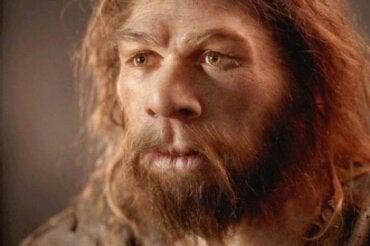 Il cervello dei Neanderthal