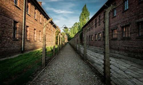 Strada con filo spinato nel campo di Auschwitz.