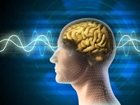 Ciclo del sonno: cervello e onde