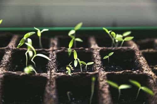 Coltivare un orto in casa è più che una moda