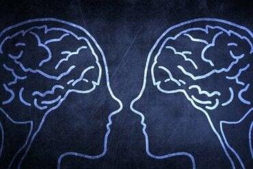 Cervello sociale, perché è un vantaggio evolutivo?