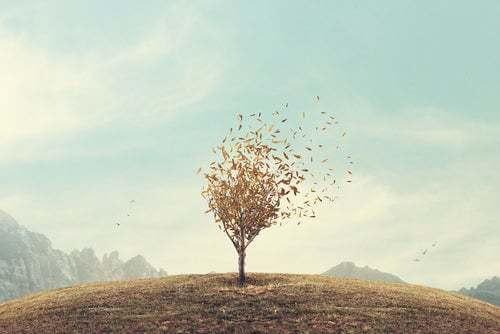 Albero che perde le foglie.
