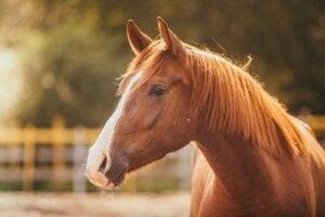 La paura dei cavalli o equinofobia