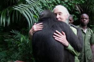 Jane Goodall, ricercatrice e attivista mondiale