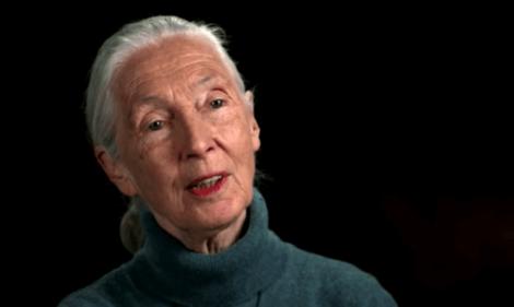 Jane Goodall parla della sua carriera come attivista.