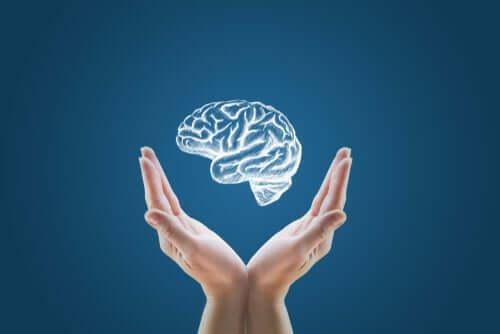 Mini cervelli creati in laboratorio: inizio della clonazione umana?