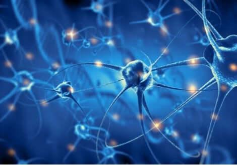 Neuroni nel cervello e connessioni sinaptiche.