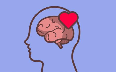 Autoregolazione emotiva, testa con cervello e cuore.