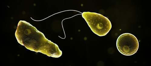 Naegleriasi: malattia potenzialmente letale