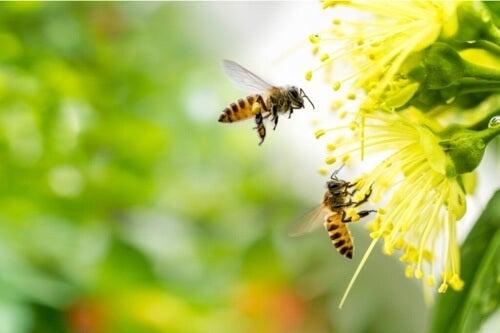 La paura delle api: cause e trattamento