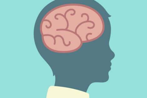 Disegno del cervello di un bambino di profilo.