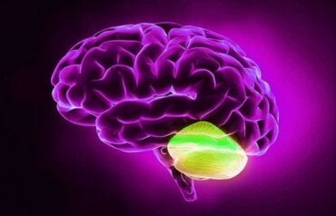 Cervelletto e pensiero divergente: che binomio!