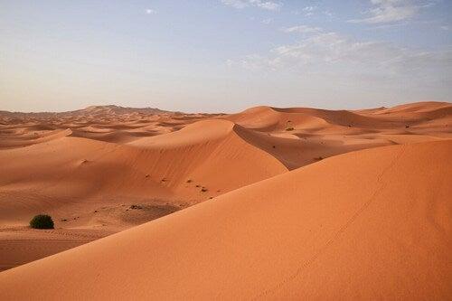 Deserto del Sahara.