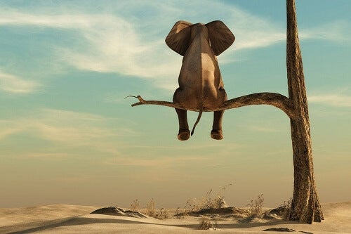 La grassofobia: l'unico elefante in sala