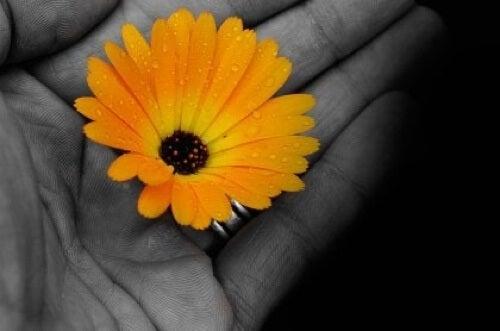 Mano con fiore giallo.