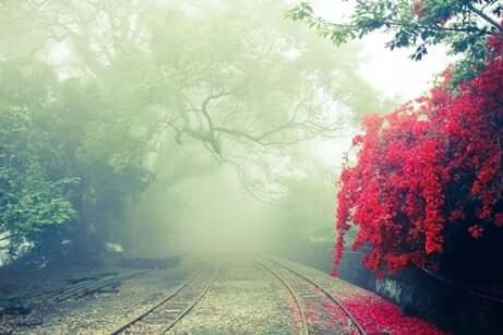 Paesaggio autunnale con nebbia.