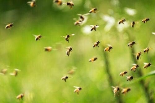 Sciame di api in volo.