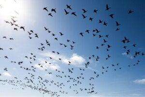 Superare la paura degli uccelli