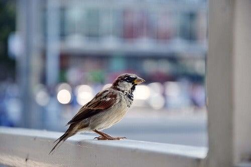 Uccello sul davanzale.