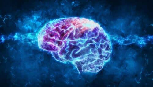 Corteccia entorinale del cervello.